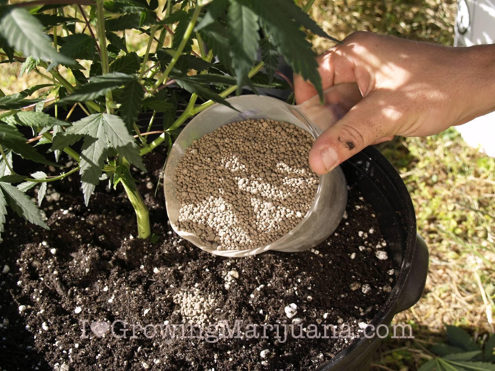 Hnojivá: Prírodné vs. chemické