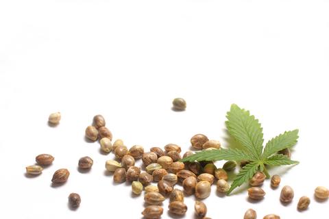 Sú semená marihuany legálne ? ÁNO